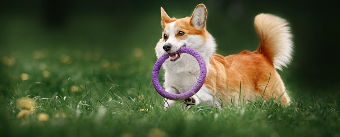 Canine Treadmill Slider
