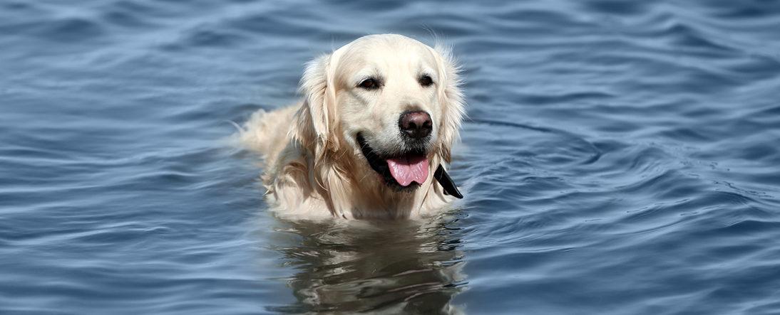 H2O For Fitness - Canine Underwater Treadmill Slide