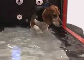 Canine Hydrotherapy Treadmill