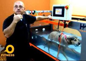 Underwater Dog Treadmill