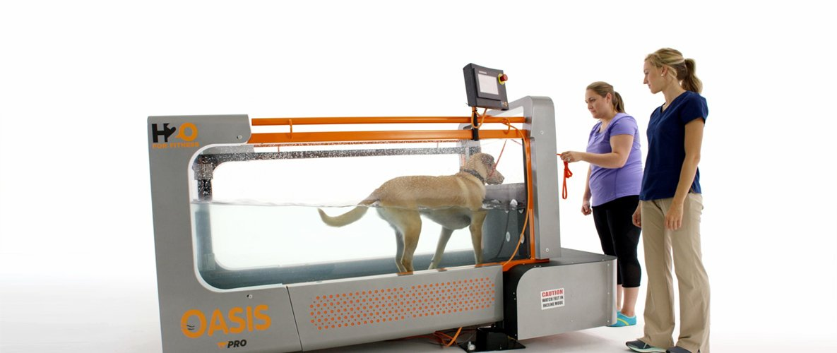 Underwater Treadmills for Canine