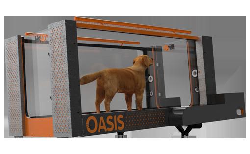 Oasis Canine treadmill