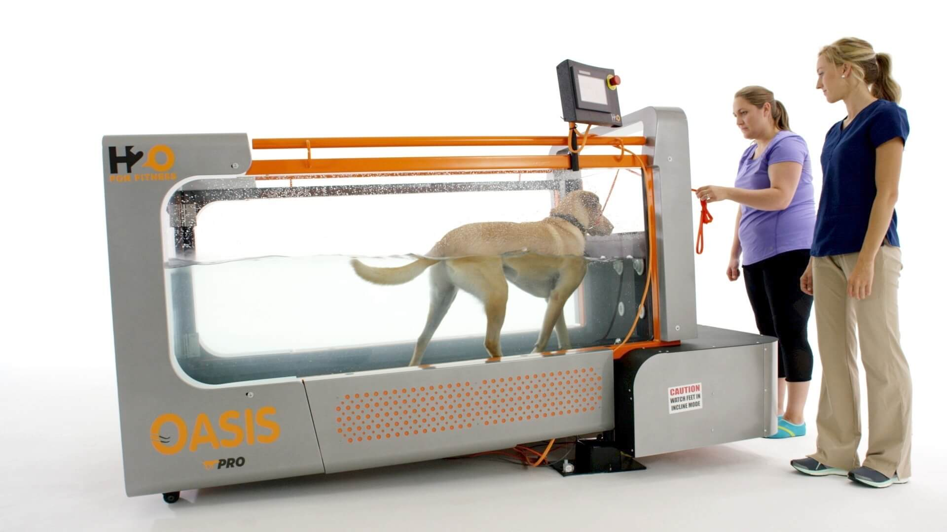 Is your dog feeling tired? Consider underwater treadmill therapy